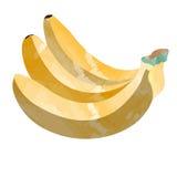 group of bananas Royalty Free Stock Photos