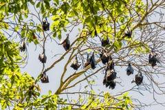 Group of Bats sleeping on tree. stock photo