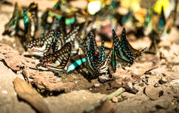 Group of beautiful butterfly. Stock Images