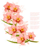 Group of beautiful pink orchid flowers. Stock Photography