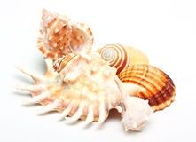 Group of Beautiful sea shell. Royalty Free Stock Photography