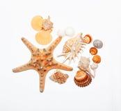 Group of Beautiful sea shell. Stock Photos