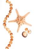 Group of Beautiful sea shell. Royalty Free Stock Image