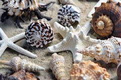 Group of beautiful sea shells on beach. A group of sea shells including star fish on a sandy beach, differing shapes colours and designs Royalty Free Stock Photos
