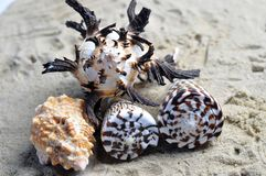 Group of beautiful sea shells. A group of four sea shells on a sandy beach, differing shapes colours and designs Royalty Free Stock Images
