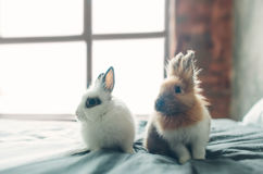 Group of Beauty Cute sweet Little Easter Bunny rabbits baby in variety colors black brown and white in the room on the stock photos