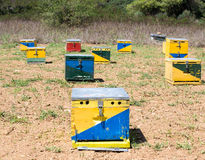 Group of Bee Hives Stock Image