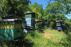 Group of Beehives. Organic honey farm in rural Macedonia. A group of beehives standing in the garden royalty free stock image