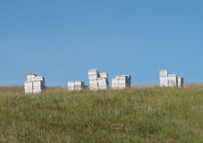 Group of beehives in a pasture Royalty Free Stock Image