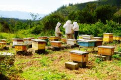 A group of beekeepers stock image