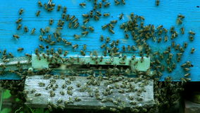 The Group of Bees in The Hive stock footage