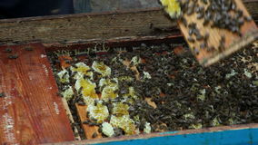 The Group of Bees in The Hive. Preparations Before stock video