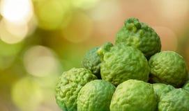 Group of bergamot in garden,kaffir, Aroma therapy Stock Photos