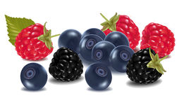 Group of berries. Stock Photography
