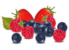 Group of berries. Royalty Free Stock Photo