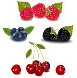 Group of berries. Royalty Free Stock Image