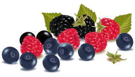 Group of berries. Royalty Free Stock Photos