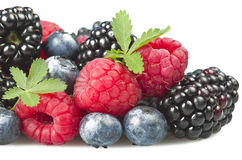 Group of berries Stock Image