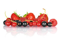 Group of berries Stock Photography