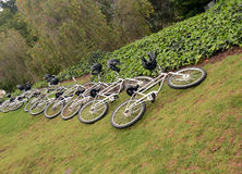 Bicycles on a lawn Stock Images