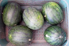 Group of big sweet green watermelons stock photography