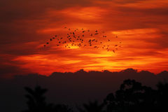 Group of bird in sunset Royalty Free Stock Photography