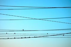 Group of bird on wires. Group of sparrow on wires royalty free stock image