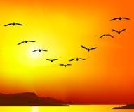 Group of birds. A group of migratory birds on sunset background Stock Photo
