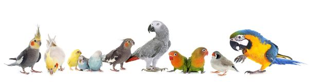 Group of birds Royalty Free Stock Image
