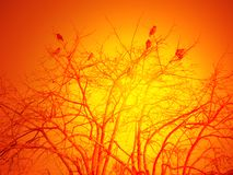 Group of birds. Group of  birds standing on the tree in twilight Royalty Free Stock Photography