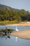 Group of birds on beach of Palomino. Group of birds early in the morning on the coastline near Palomino, La Guajira, Colombia 2014 Royalty Free Stock Images