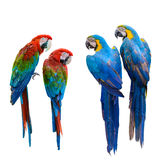 Group of birds. Stock Photography