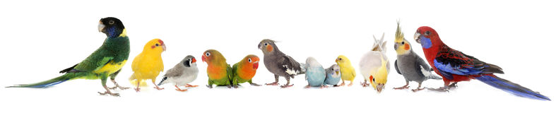 Group of birds Royalty Free Stock Photo