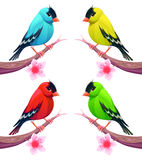 Group of birds in different color tones Stock Photography