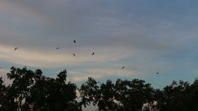 Group birds fly from tree evening. stock video footage