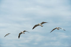 Group of Birds gliding on cloud and sky Stock Image