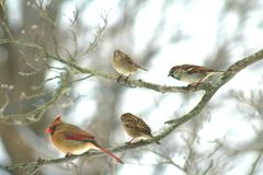 Winter Birds of New York royalty free stock photo