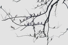 Group of birds land on dry branch Stock Photos