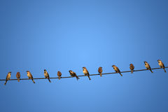 Group of birds on a power line concept of risk. As background stock photography