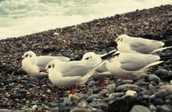 Group of birds on the seashore stock photos