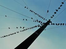 Group of birds sitting on wires. A flock of birds sitting on three wires against the blue sky Royalty Free Stock Photography
