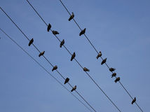 Group of birds sitting on wires Stock Photos