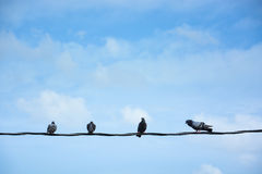 Group of birds on wire Stock Photo