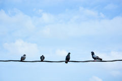 Group of birds on wire Stock Images