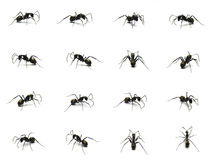 Group of Black ant isolated on white background. Stock Photography