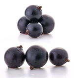 Group of black currant Royalty Free Stock Image