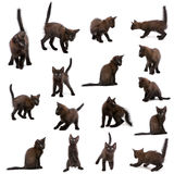 Group of black kittens Royalty Free Stock Images