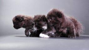 Group of black kittens on dark backround Stock Image