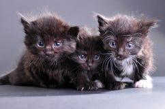 Group of black kittens on dark backround Stock Photography