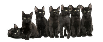 Group of Black kittens sitting together, 2 months old, isolated Royalty Free Stock Photos